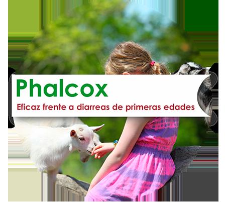 Phalcox